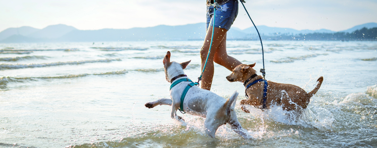 The Complete Guide To Moving Your Dogs Cats And Other Pets To Hawaii Royal Hawaiian Movers Rhm